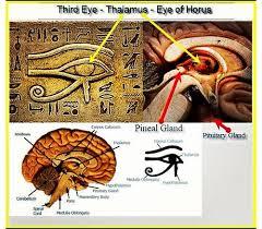 Pineal Gland - Eye of Heru